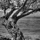 Gnarled Old Tree by njordphoto
