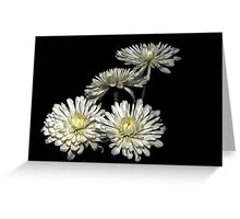 Four Mums Greeting Card