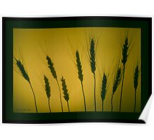 GOLDEN WHEAT  Poster