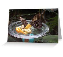 Feeding butterflies Greeting Card