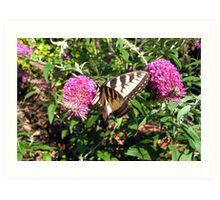 Tiger Swallowtail on Butterfly Bush Art Print