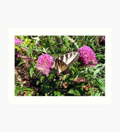Tiger Swallowtail on Butterfly Bush Art Print