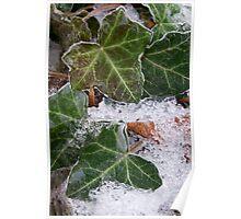 Winter Series: Frozen Ivy Poster