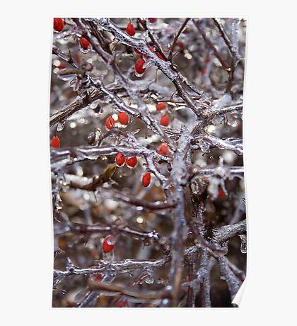 Winter Series: Frozen Berries On A Stick Poster