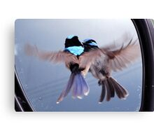 Twins - Superb Fairy-wren Canvas Print