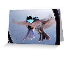 Twins - Superb Fairy-wren Greeting Card