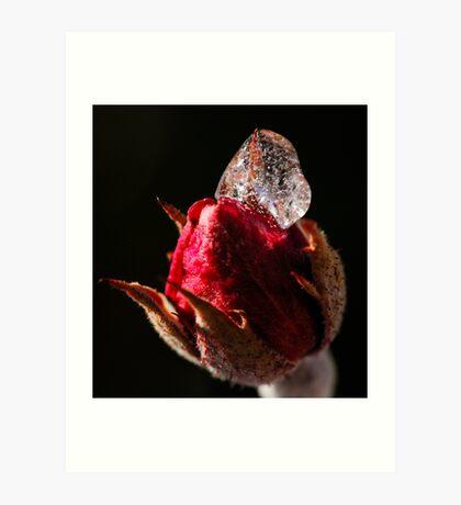 Rose Icing Art Print