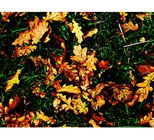 Autunm Leaves Photographic Print