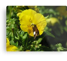 Butterfly on Pansy Metal Print