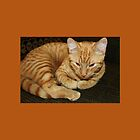 Kitty Cat Pillow by WeeZie