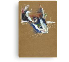 Ketamine the rat Canvas Print