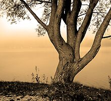 Tree On The Shore by Rok Cuder