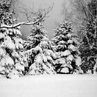 Vermont Winter Wonderland  by Nicole Chambers