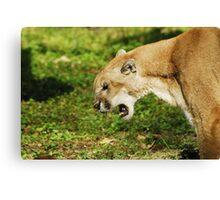 Florida Panther Growl Canvas Print