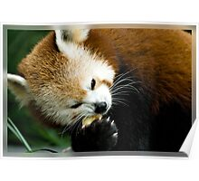 The Red Panda Poster