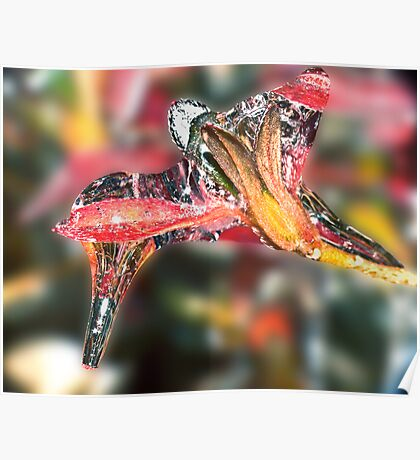 Hummingbird Icicle ! Poster