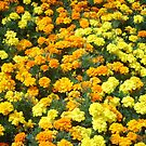 Island Flowers by bluekrypton