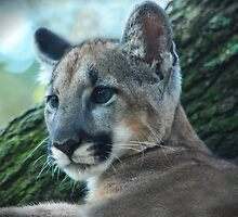 PANTHER by Claude Desrochers
