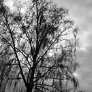 Tree and sky by Vicent Alcaraz Coll