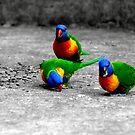 Rainbow Lorikeets  Mum Dad & Junior by DavidIori