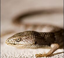 Lizard 1 by redleafphotography