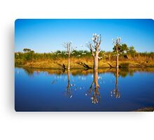 Derby Wetlands' Cockies Canvas Print