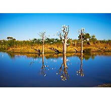 Derby Wetlands' Cockies Photographic Print