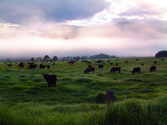 Kangaroo Valley Australia  city photo : ... Johnson › Portfolio › Mooning Kangaroo Valley, NSW Australia