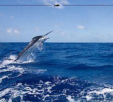 Handsome Black Marlin by blackmarlinblog