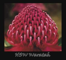 NSW Waratah by Ben Shaw