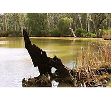 Old Stumpy by Lorraine McCarthy Photographic Print