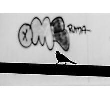 Graff Pigeon Photographic Print