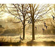 Aerial Combat Photographic Print