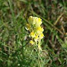 yellow flower by bluekrypton