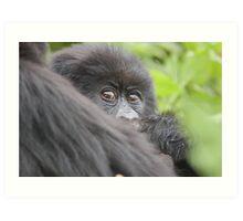 Baby Mountain Gorilla Art Print