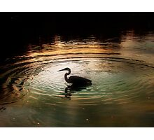 Silhouette of Blue Heron in Rainbow rings Photographic Print