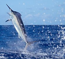 Big Splash Leap Marlin by blackmarlinblog
