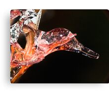 Duck Icicle ! Canvas Print