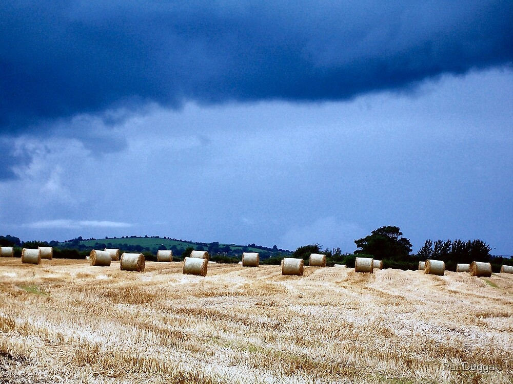 Hayfield in Tipperary, Ireland by Pat Duggan