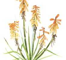 Red Hot Poker Aloe Plant in Watercolour by Lucy Hollis
