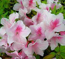 Light Pink Azalea by EarthAnime