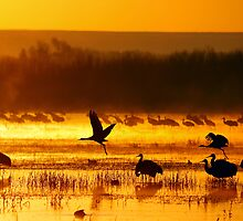 Magic Bosque Morn by FortPhoto