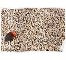 Ladybug on a Wall Poster