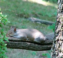 Sleepy Squirrel by Danielle Kerese