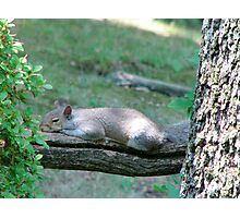 Sleepy Squirrel Photographic Print