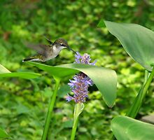 Hummingbird with Pickerel Rush by Danielle Kerese