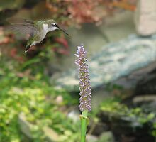 Hummingbird with Pickerel Rush 2 by Danielle Kerese