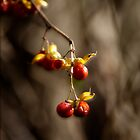 Berries by Rod  Adams