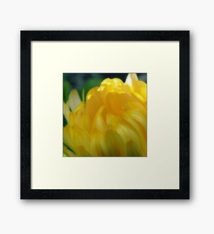 Sunshine in Bloom - the Painting Framed Print