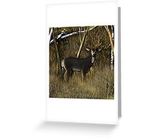 Buck in the Brush Greeting Card
